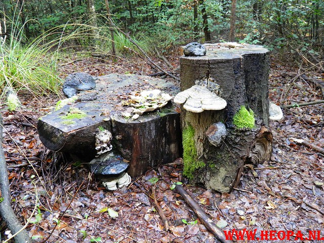 22-10-2011             Driebergen         26 km (64)