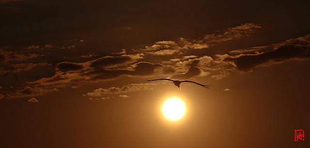 Quand passe la cigogne devant le soleil couchant