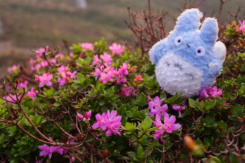2014-05-05_02039_九州登山旅行.jpg