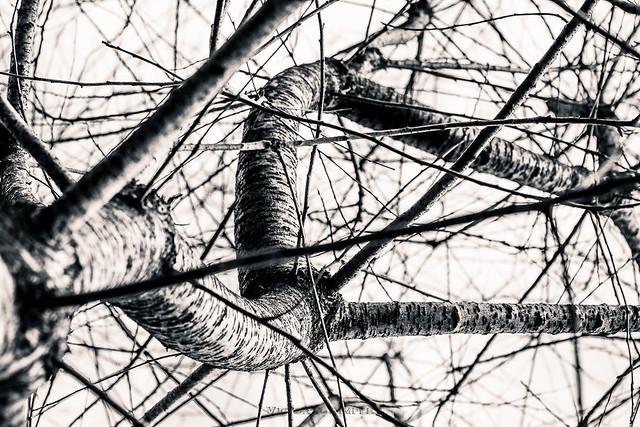 Hesitating branch