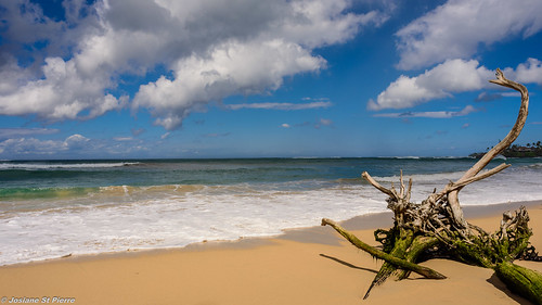 ocean trees sea sky beach nature landscape island sand nikon waves maui d750