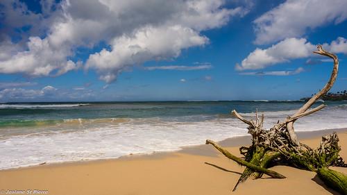 ocean trees sea sky beach nature landscape island sand nikon waves maui d750
