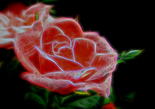 Art-Rose | by Chris Sorge