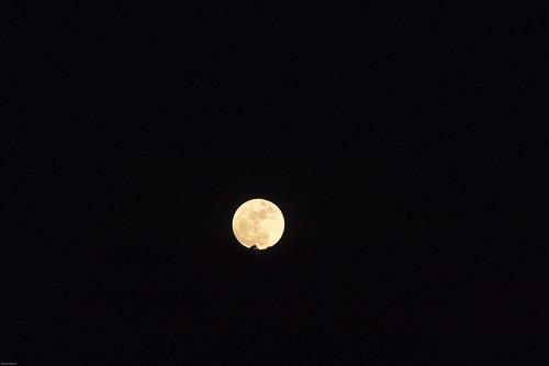 ocean sea sun moon japan sunrise pacific fullmoon chiba 日本 太陽 thepacificocean the 鴨川 千葉県 太平洋 満月 ご来光 komogawa 太海 鴨川市 日の出sun