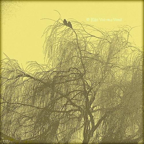 climb a tree, it gets you closer to heaven!