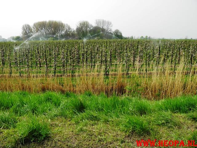 16-04-2011     Rode-Kruis   Bloesem   wandeltocht 26 Km (68)