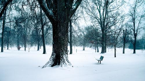 park trees winter snow cold bench landscape virginia richmond va rva