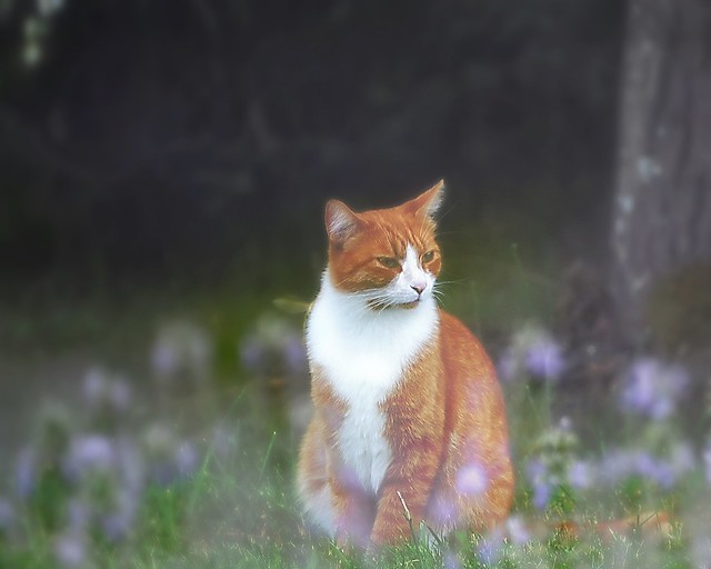 Country Cat :-)