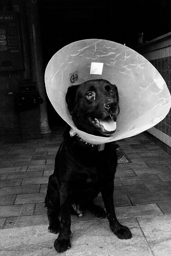 Cone of Shame | by Piero Tranchida
