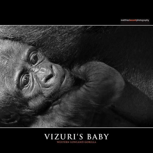 VIZURI'S BABY