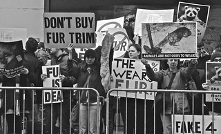 Don't buy Fur.... [*** RE POSTED, 1-08-19**}