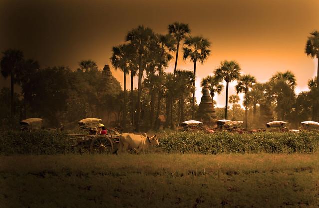 Paysage : la plaine de Bagan / Landscape- Myanmar
