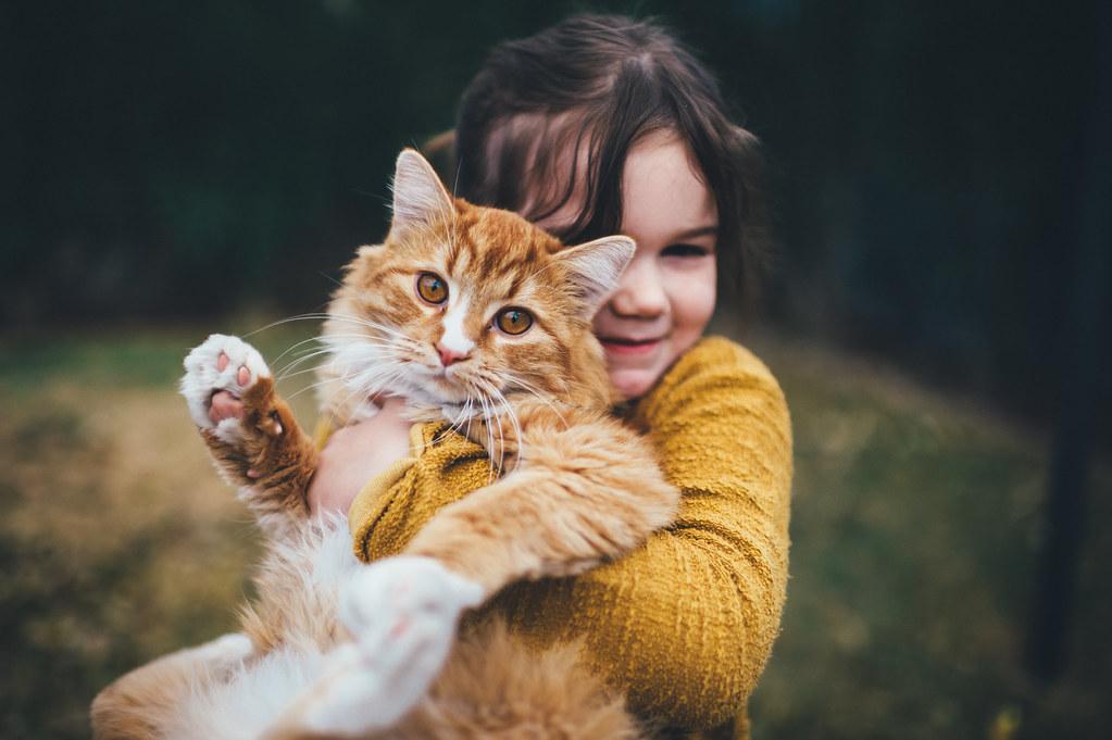 this cat