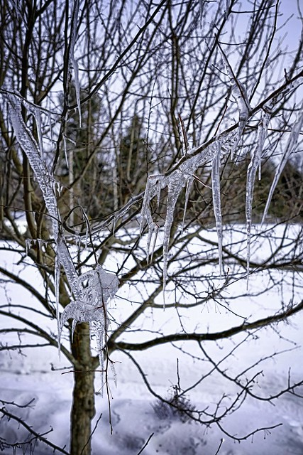 Icicles on tree branches.
