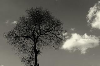 _DSC2963Xb1 | by Marcelo Leme