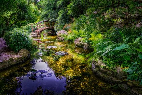 bridge reflection tree water rock stone austin outside us pond texas unitedstates path hdr zilkerbotanicalgardens
