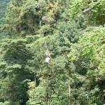 03 Viajfilos en Panama. Canopy en Boquete 24