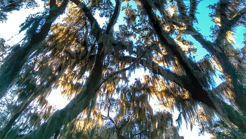 florida htc forest trees loveflorida floridasprings pureflorida tree spanishmoss