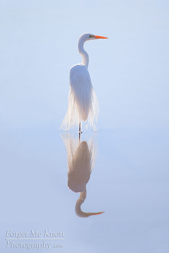 ocean california morning blue sunset sea white reflection bird water backlight sunrise bay pacific tide ghost calm basin clear wetlands backlit lowtide egret tidal greategret glassy bolsachica brianknott forgetmeknottphotography fmkphoto