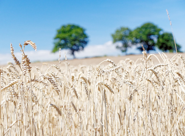 Bountiful Harvest I