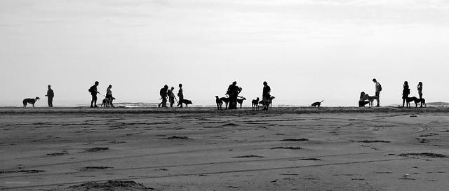 Tot passejant els gossos / Walking the dogs