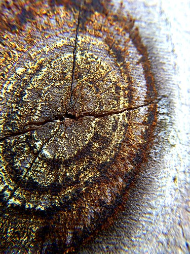 2016 knots potd wood macro circles 800views