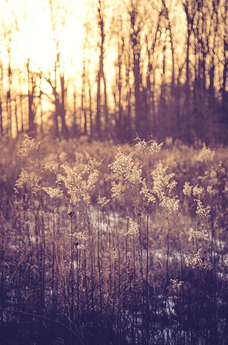 nature forest golden pennsylvania meadow longwoodgardens goldenhour kennettsquare
