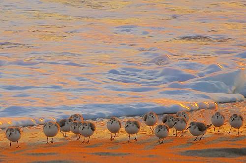 ocean beach birds sunrise dawn florida terns indialantic