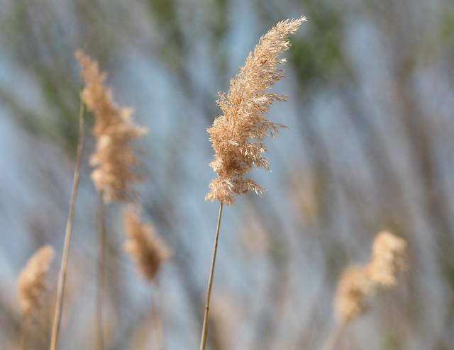 Spring Breeze in Bear Swamp