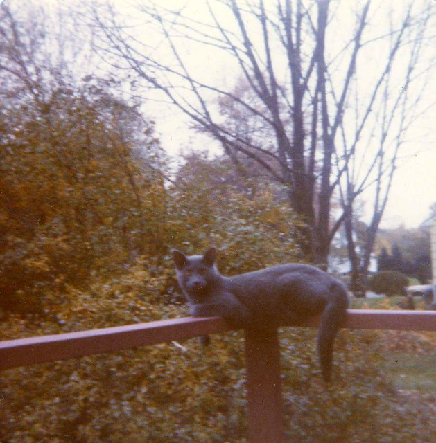 cat on porch Lincoln park new Jersey 1970s
