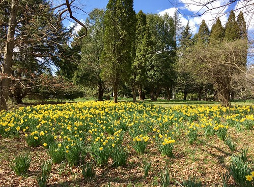 baltimore maryland cylburnarboretum parks trees flowers daffodils cmwd