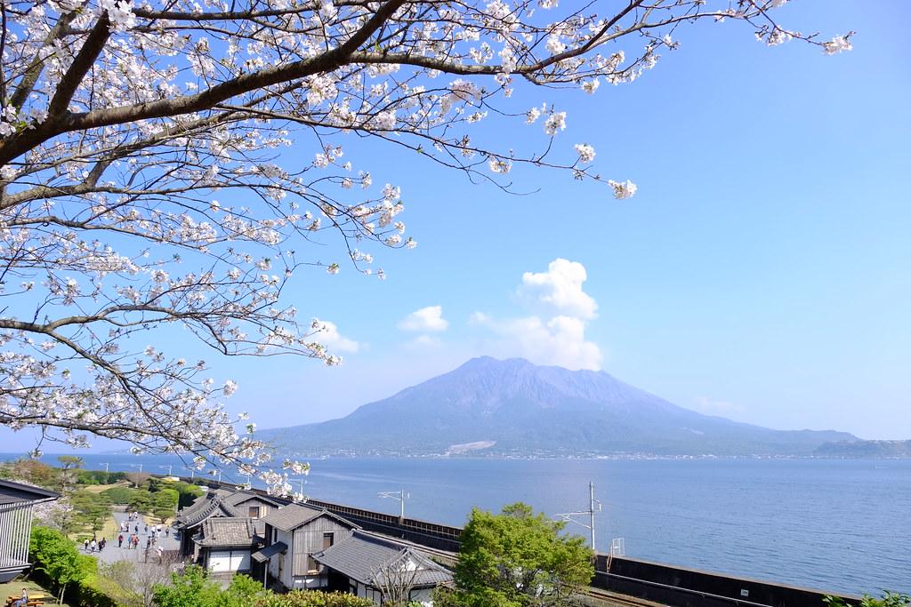 Image result for kagoshima blossom