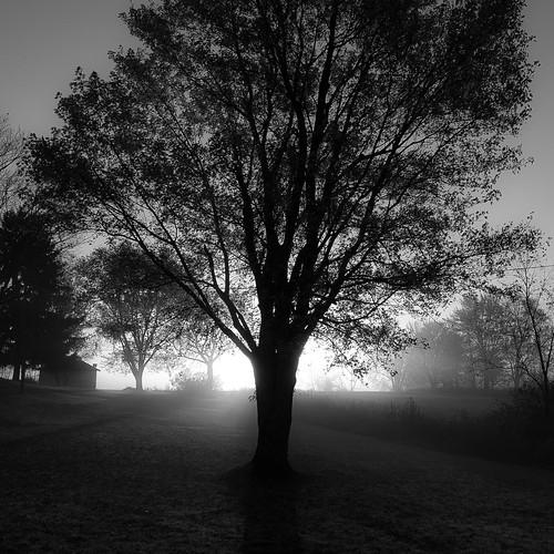 autumn trees light blackandwhite bw sunlight mist monochrome silhouette misty fog sunrise square landscape blackwhite nikon frost branches foggy d5000 noahbw
