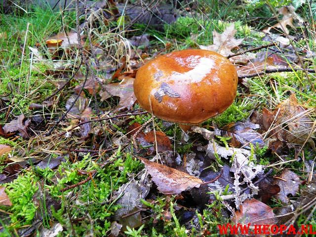 22-10-2011             Driebergen         26 km (84)