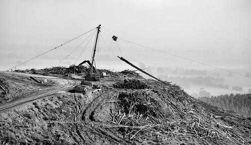 summer bw fog mono nikon timber foggy logs logging australia monotone victoria vic winch gippsland loggers timberindustry pineplantation westgippsland d5100 cloverlea cablelogging nikond5100 phunnyfotos softwoodplantation