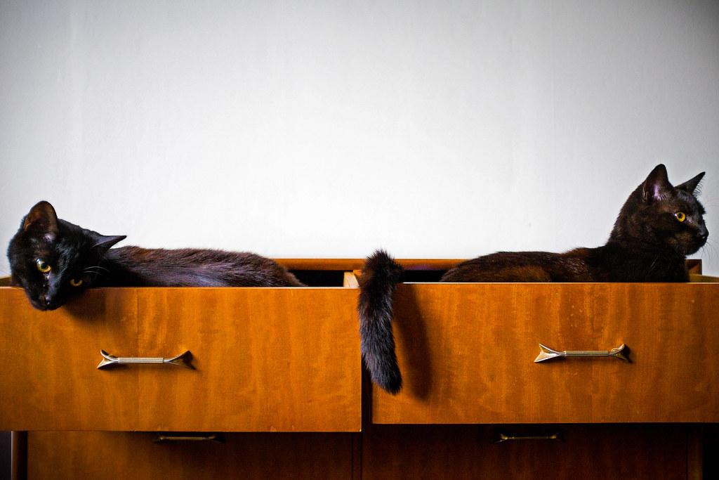 Cat Drawers, Wellington, New Zealand