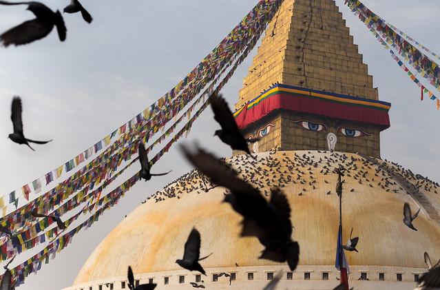 Pigeons flocking around Bodhnath stupa in the early mornin