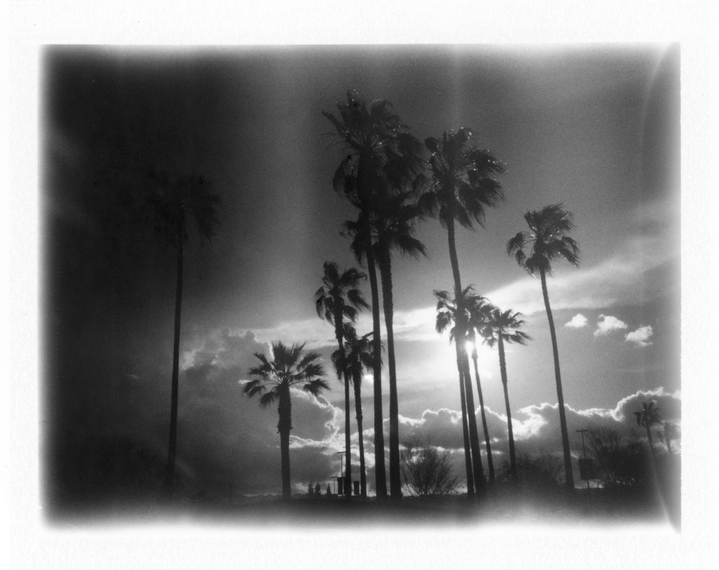 Costco palm sunset by danwri