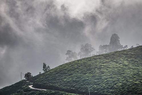 nuwaraeliya centralprovince srilanka tea teaplantation hill hills clouds sky