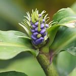 Di, 03.02.15 - 11:38 - Spanisch-Unterricht im Botanischen Garten mit Sonia