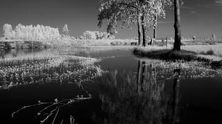 1 Bed lake side processed bw EPM1   by Matt Jones (Krasang)