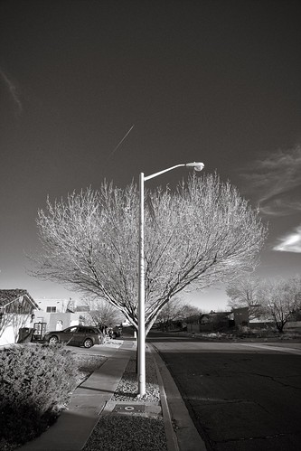 Street Lamp and Tree | by rogersup