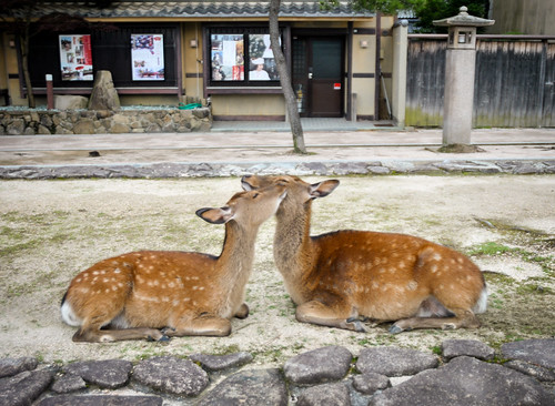 Miyajima 008 | by couplemeetsworld