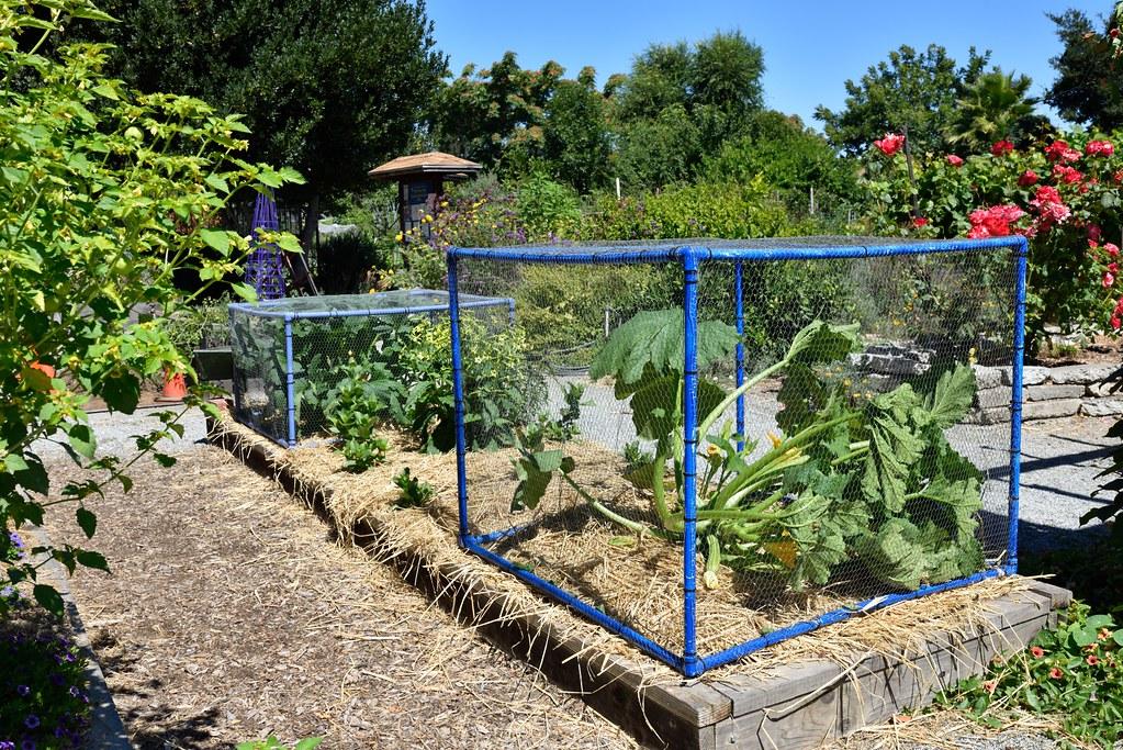 Dsc 5917 01 master gardeners of santa clara county flickr - Master gardeners santa clara county ...