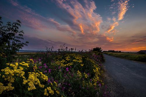 ocean sunset sky landscape wildflowers boundarybay dike deltabc sonya65