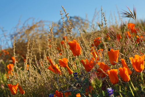 SOUTHERN CALIFORNIA SPRING | by Rennett Stowe