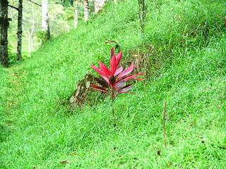 Costa Rica 2006 - 383