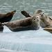 Alaska - Wildlife