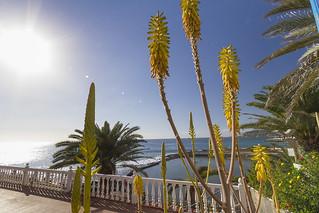 Arguineguin, Mogan, Gran Canaria - Flowers Sea Promenade