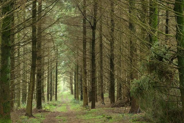 Field Grove Wood Scene